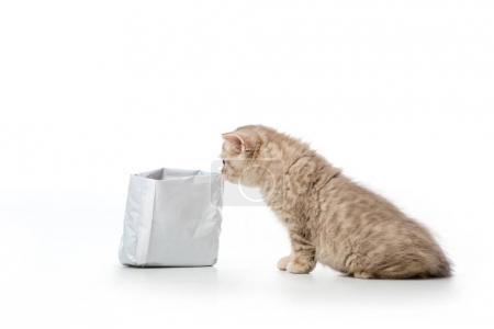 Photo pour Mignon petit chaton à poil court britannique sac à renifler isolé sur blanc - image libre de droit