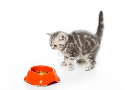 cute little kitten looking at plastic bowl with cat food isolated on white
