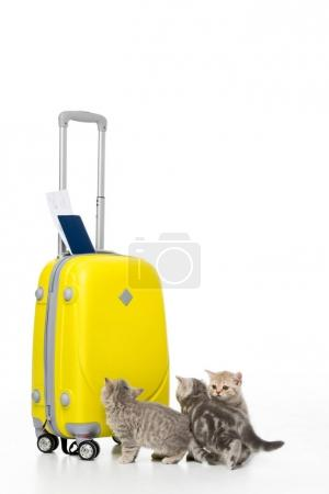 three adorable kittens near yellow suitcase with passport and ticket isolated on white