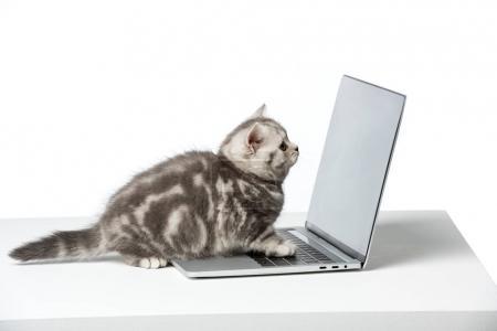 Photo pour Mignon petit chaton à l'aide d'un ordinateur portable avec écran blanc sur le dessus de table - image libre de droit