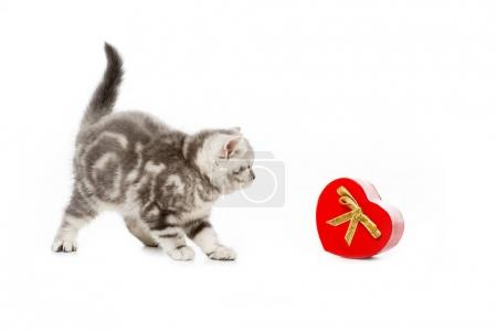 cute little kitten with heart shaped gift isolated on white