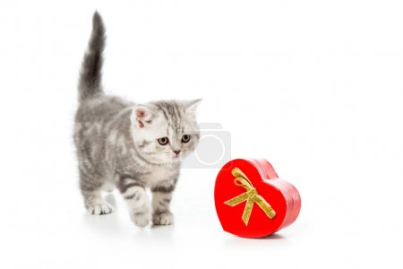 adorable kitten with heart shaped gift isolated on white