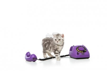 adorable little kitten with purple rotary telephone isolated on white