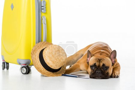 Photo for Adorable french bulldog with yellow suitcase, straw hat, ticket and passport isolated on white - Royalty Free Image