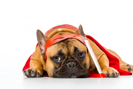 close up view of cute french bulldog in superhero costume with smartphone isolated on white