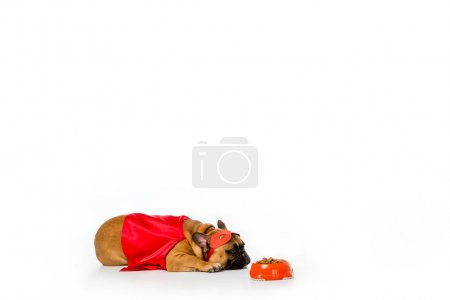 adorable french bulldog in superhero costume lying near bowl full of dog food isolated on white