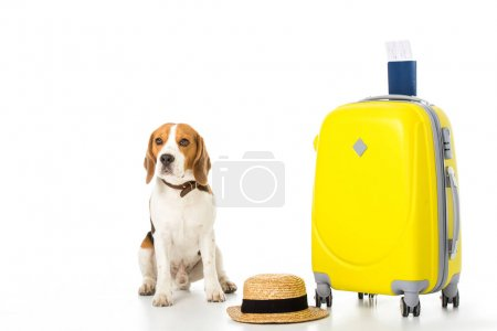 beagle dog with suitcase, passport, ticket and straw hat isolated on white