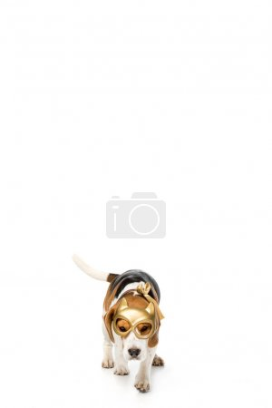 adorable beagle dog in golden mask isolated on white