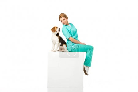 veterinarian in uniform sitting on white cube together with beagle dog isolated on white
