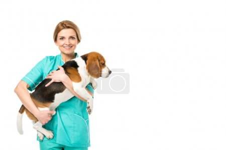 portrait of smiling veterinarian in uniform holding beagle dog isolated on white