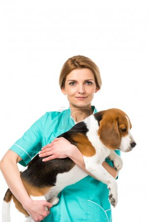 portrait of veterinarian in uniform holding beagle dog isolated on white