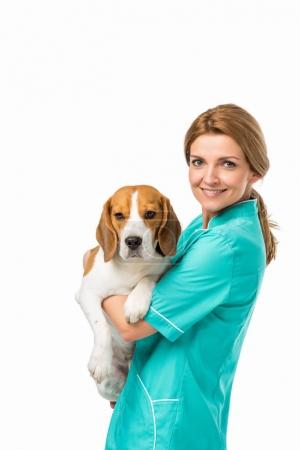 side view of smiling veterinarian in uniform holding cute beagle dog isolated on white