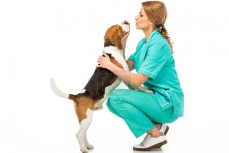 side view of veterinarian in uniform with cute beagle dog isolated on white