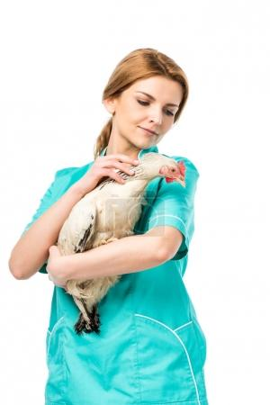 portrait of veterinarian in uniform holding chicken isolated on white