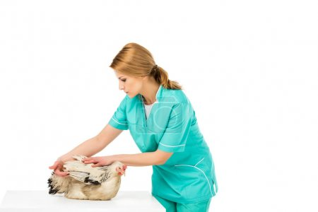 portrait of veterinarian examining chicken isolated on white