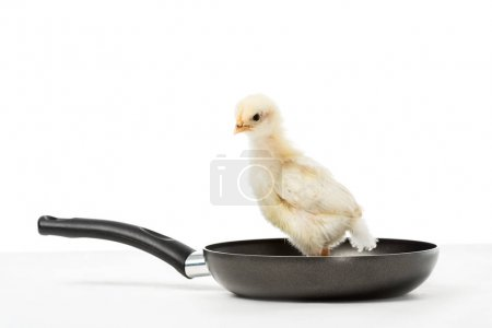 Photo for Close up view of cute little chick on frying pan isolated on white, animal eating protest concept - Royalty Free Image