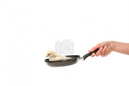 partial view of woman holding frying pan with little chick isolated on white, animal eating protest concept
