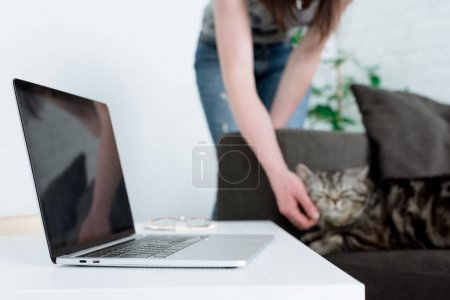 cropped shot of woman petting scottish straight cat with laptop standing on table on foreground