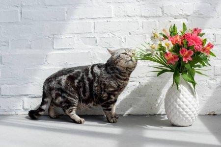 Photo pour Adorable écossais droit chat renifler beau bouquet dans le vase - image libre de droit