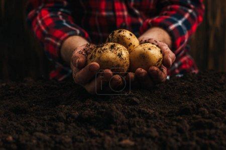 Photo pour Vue en coupe d'un agriculteur tenant des pommes de terre naturelles sales près du sol - image libre de droit