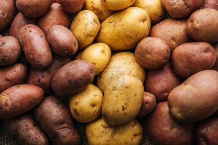 Photo for Organic raw potatoes on white background - Royalty Free Image