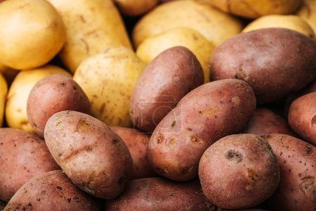 Photo for Organic raw potatoes on white background - Royalty Free Image