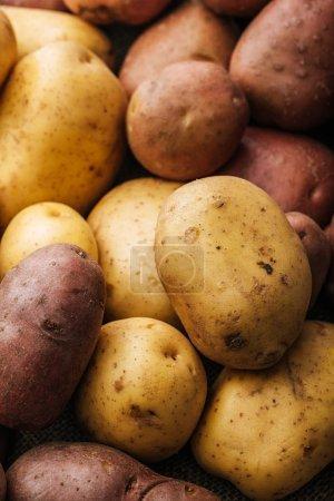 Photo pour Pommes de terre crues biologiques sur fond blanc - image libre de droit