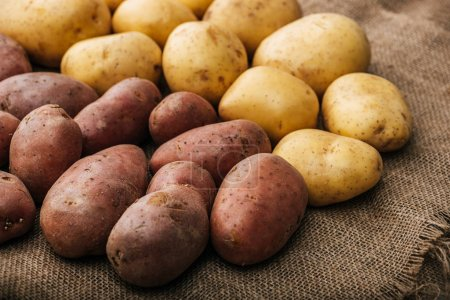 Photo for Organic raw potatoes on brown rustic sackcloth - Royalty Free Image