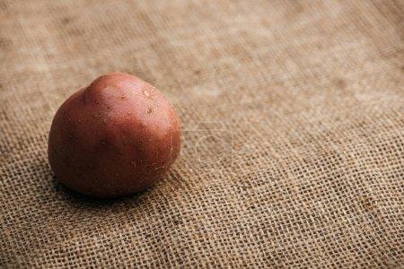 Photo pour Vue de près de la pomme de terre biologique crue sur un sac rustique brun - image libre de droit