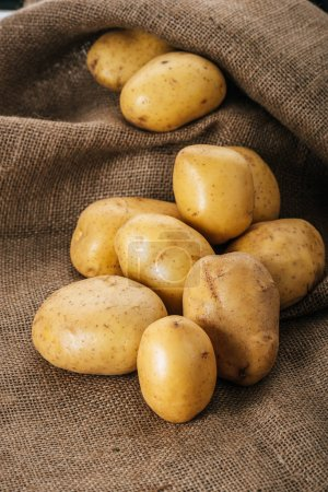 organic raw potatoes on brown rustic sackcloth
