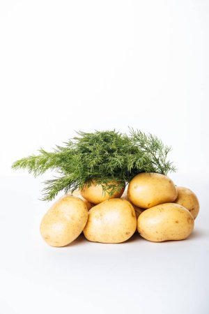 Photo for Raw potatoes with fresh dill on white background - Royalty Free Image