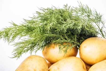 Photo for Raw potatoes with fresh dill isolated on white background - Royalty Free Image