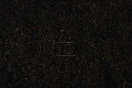 Photo for Top view of brown ground background - Royalty Free Image