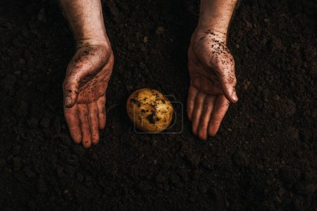 Photo pour Vue partielle d'un fermier sale près d'une pomme de terre mûre dans le sol - image libre de droit