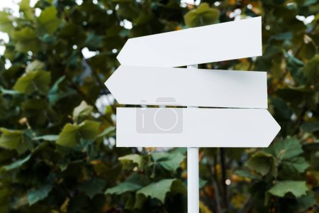Photo for White and empty directional arrows near bush with green leaves - Royalty Free Image