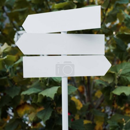 Photo for Close up of white and empty directional arrows near bush with green leaves - Royalty Free Image