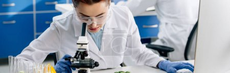 Photo for Panoramic shot of molecular nutritionist using microscope and sitting at table - Royalty Free Image