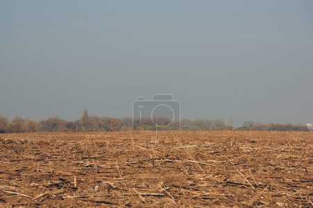 Photo for Field with tree sticks on ground and cloudy sky - Royalty Free Image