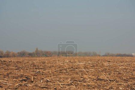 Photo pour Champ avec des branches d'arbre sur le sol et un ciel nuageux - image libre de droit