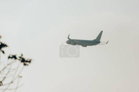 Photo pour Concentration sélective de l'avion dans le ciel nuageux avec des plantes sur le terrain - image libre de droit
