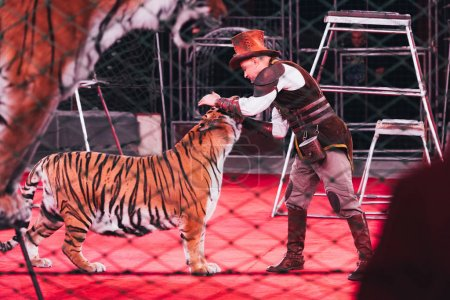 Photo for KYIV, UKRAINE - NOVEMBER 1, 2019: Side view of handler performing with tiger in circus - Royalty Free Image