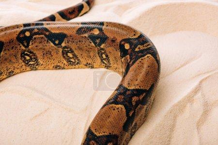 Photo pour Vue grand angle du python sur sable texturé - image libre de droit