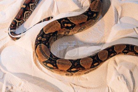 Photo pour Vue grand angle du python tordu sur sable texturé - image libre de droit