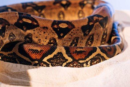 Photo pour Vue rapprochée de la peau de serpent texturée de python sur sable sur fond bleu - image libre de droit