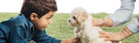 panoramic shot of mother holding Havanese puppy and son looking at it isolated on white