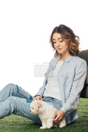 Photo pour Femme assise sur l'herbe et regardant chiot Havanais isolé sur blanc - image libre de droit