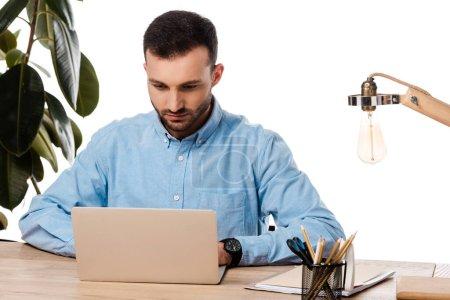 bearded freelancer using laptop near plant isolated on white