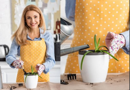 Photo for Collage of woman with shovel and flowerpot with plant near table smiling, looking at camera and watering aloe in kitchen - Royalty Free Image