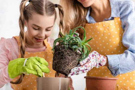 Photo for Mother putting aloe to flowerpot near happy daughter with gardening tool in kitchen - Royalty Free Image