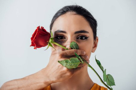 Photo for Male hand holding rose and covering mouth to indian woman with bruise isolated on grey - Royalty Free Image